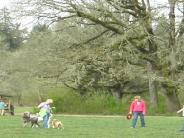 Dog Parks In West Linn Oregon