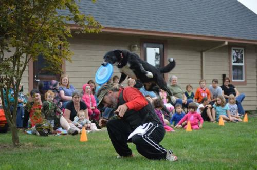 Image result for border collie international performing k-9 team